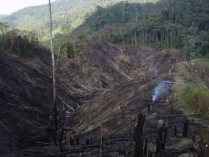 deforestation around mountains